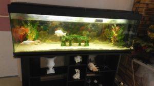6-Cadre-de-vie-aquarium-1